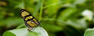 Sommerfuglen symboliserer den transformation der kan ske i tantramassagen