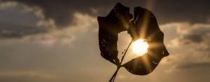Natursymbol på det guddommelige lys i hjertet