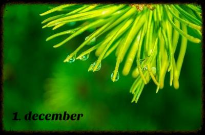 1-december