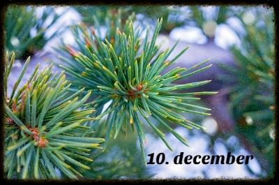 julekalender 10. december