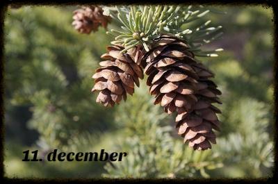 julekalender 11. december