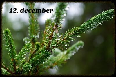 julekalender 12. december