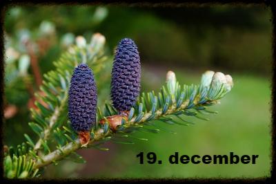 julekalender 19. december