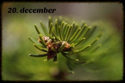 julekalender 20. december
