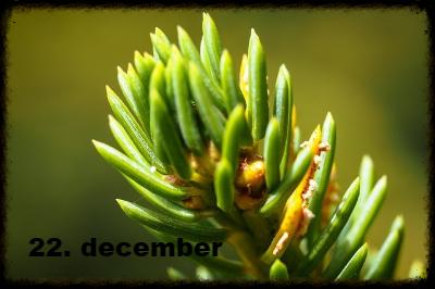 julekalender 22. december