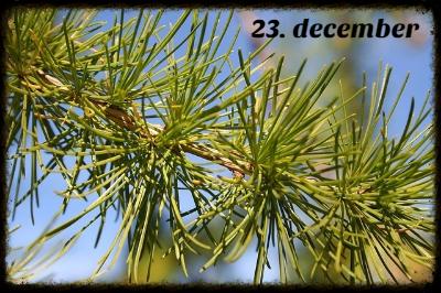 julekalender 23. december