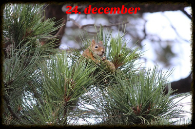 julekalender 24. december
