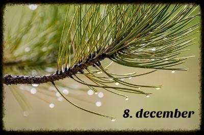 julekalender 8. december