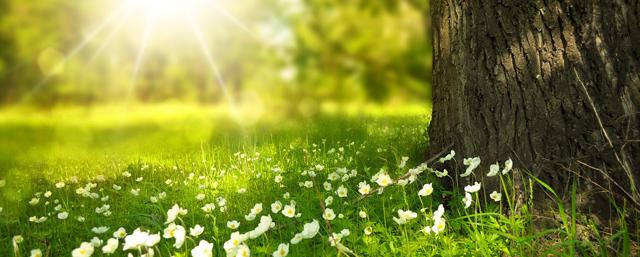 Feriepriser sommeren 2018 - Billedet viser en smukt blomstereng i solskin
